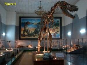 Figure 4: A complete predator dinosaur found intact in Gobi Desert in Mongolia.