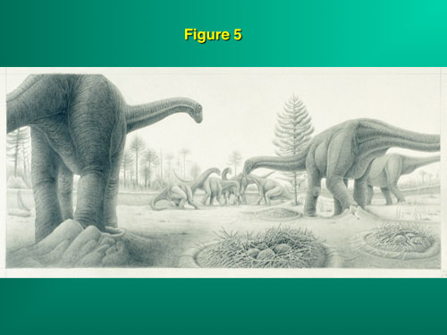 Figure 5: Dinosaurs laid their eggs in nests similar to crocodilians where temperature variation was the rule.