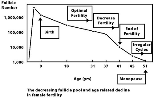 follicle_pool