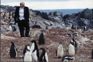 Among the penguins: Silber blends in with the locals in Antarctica.