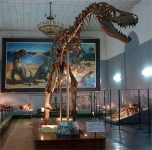 Figure 4. A complete predator dinosaur found intact in Gobi Desert in Mongolia.