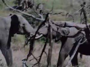 Reproductive Behavior of African Wildlife