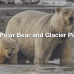 title screen polar bears and glacier puzzle bear and cub